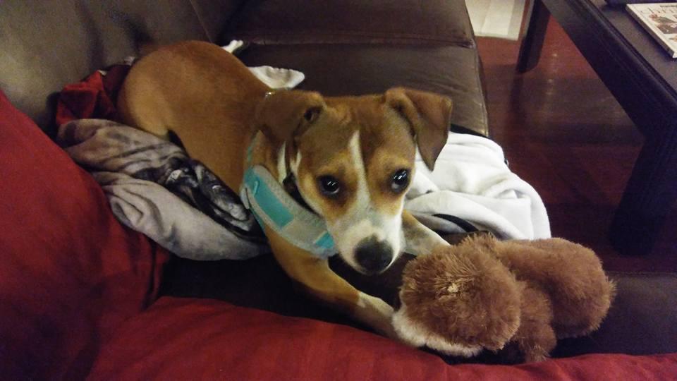 A Dog's Purpose Part 2: Lena