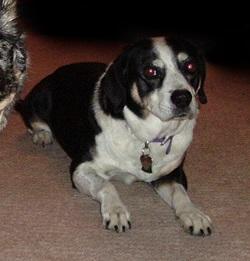 A Dog's Purpose Part 1: Belle